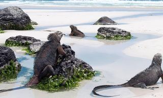 The Galapagos Islands: Escape To The Islands