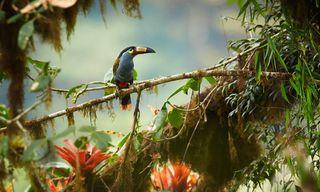Ecuador: Birdwatching In Northern Ecuador