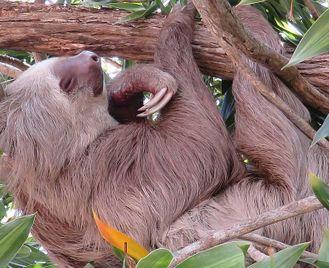 Panama: Nature Tour - The Biological Bridge