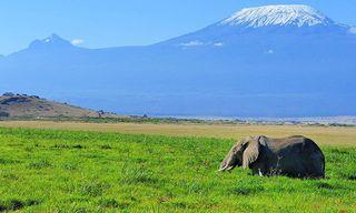 Kenya: Mombassa Beach And Tsavo / Amboseli Safari