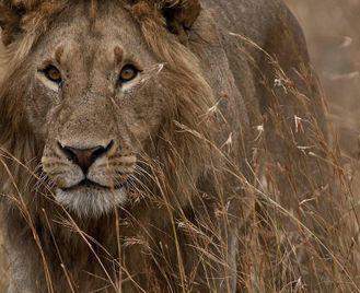 Kenya: The Northern Treasures