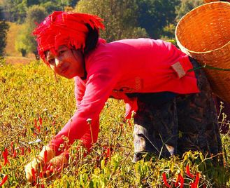 Burma: Food, Tempels And Nature - Uncover It All