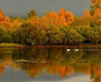 Mongolia: Bird Watching Tour
