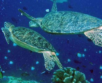 The Philippines: Let's Go Diving