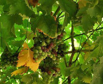 Uruguay: Wines Heritage