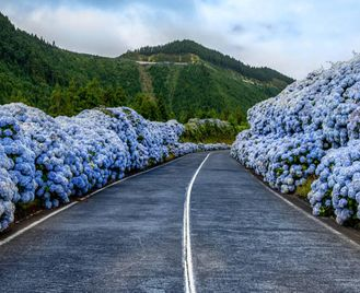Portugal: Azores Road Trip And Whale Watching