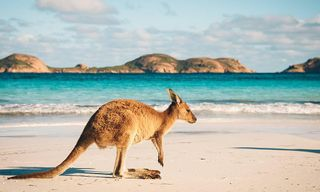 Australia: Beaches, Reefs And Cityscapes