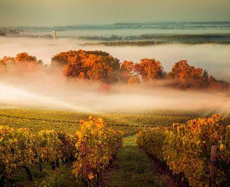 France: Gourmand's Tour Of Bordeaux