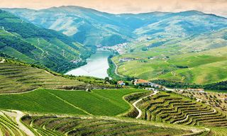 Portugal: Douro Valley Wine And Nature