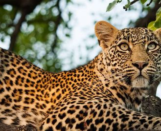 South Africa: South African Safari And Mozambique Islands
