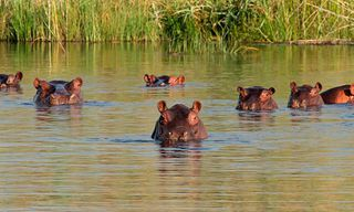 South Africa: South African Safari Adventure For Families