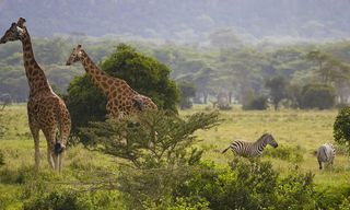 Kenya: Foothills Of Mount Kenya And Safaris