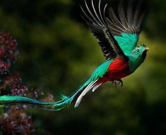 Costa Rica: Experience The Wildlife Of Costa Rica