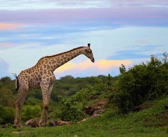 Botswana: Botswana And Zimbabwe
