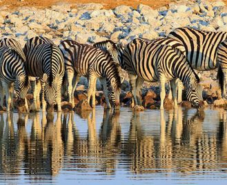 Namibia: Wild Family Adventure With Camping