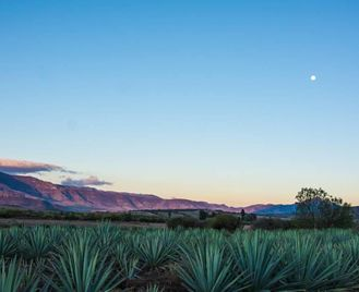 Mexico: Whistle-Stop In Oaxaca