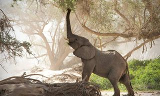 Namibia: Snapshot Of Safari, Sand Dunes And Ocean