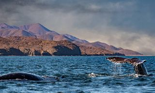 Argentina: Winter And Whales In Patagonia