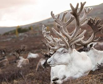 Mongolia: A Journey To Reindeer And Duka Culture