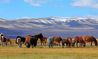 Mongolia: Adventure Trip In Mongolia