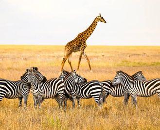 Tanzania: Mud, Sweat And Safari