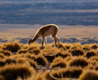 Patagonia: Off The Tourist Track Patagonia