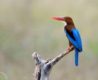 Ghana: Birdwatching And Nature Exploration