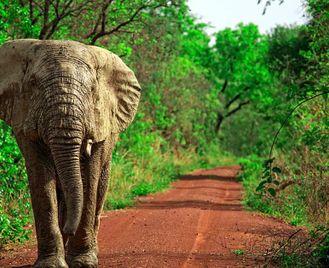 Ghana: Cultural And Wildlife Journey Through Ghana, Togo And Benin