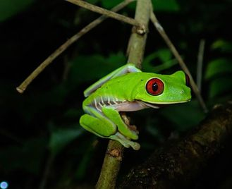 Madagascar: Rainforests Hikes And Ocean Sailing
