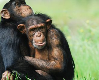 Uganda: Meet The Gorillas