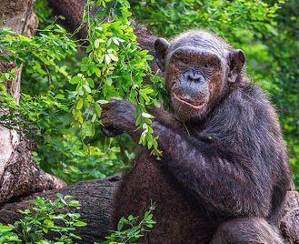 Rwanda: From The Lush Rainforest To Magnificent Volcano