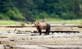 Whales & Bears Of British Columbia