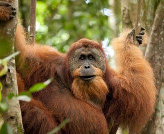 Primates & Dragons Of Indonesia