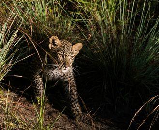 Kenya Photographic Safari With Paul Goldstein