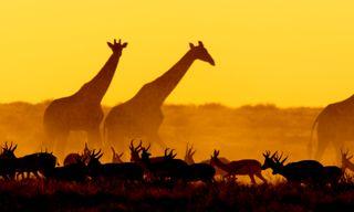 Namibia 4Wd Desert Safari