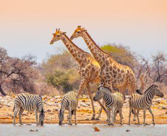 Namibian Family Adventurer