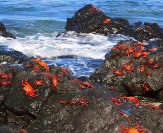 Galapagos Islands - Cachalote Explorer (Itinerary A)