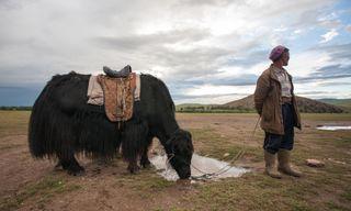 Cycling In Mongolia