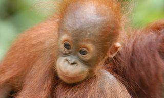 Trekking Borneo & Beyond