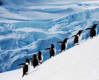 Antarctic Circle Quest