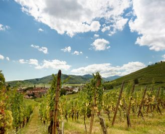 Villages & Vineyards Of Alsace, Self-Guided Walk