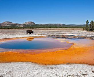 Yellowstone Wildlife Trails - Camping - Reverse