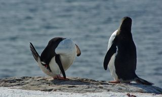 Epic Antarctica: Falklands, South Georgia & Antarctic Circle Crossing Via Buenos Aires