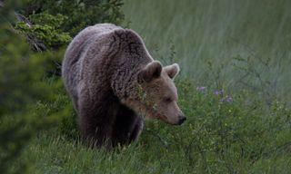 Wild Finland