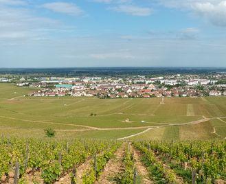 Gastronomic Burgundy Self-Guided Walking - Short Break