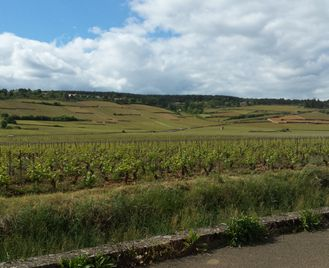 Gastronomic Burgundy Self-Guided Cycling - Short Break