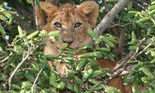 Premium Tanzania Safari