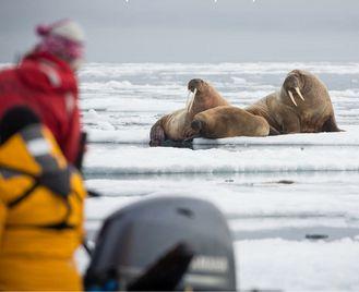 Jewels Of The Russian Arctic: Franz Josef Land And Novaya Zemlya