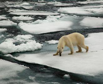 Arctic Saga: Exploring Spitsbergen Via The Faroes And Jan Mayen