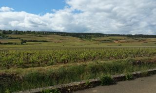 Cycling The Grand Cru Of Beaune - Short Break